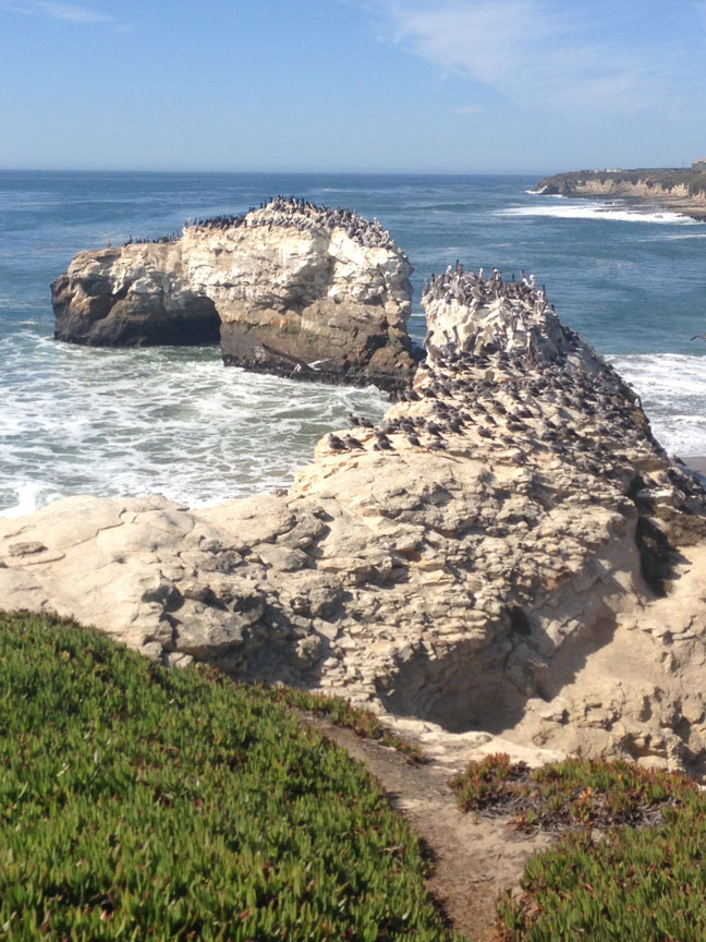 Another shot taken on West Cliff Drive during one of my regular bicycle rides, this one at Natural Bridges State Beach. Greetings from Santa Cruz!